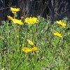 外来種の花が1年でかなり侵食してた