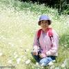 背景は山寺公園のマーガレット
