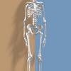 大腿直筋や外側広筋の状態の善し悪しと脊柱の側弯の関係性