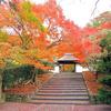 京都 紅葉100シリーズ 鈴虫、松虫の安楽寺