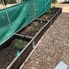 家庭菜園に植え付け記録