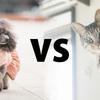 【因縁の対決】犬派vs猫派!多いのはどっち?飼い主の性格は?