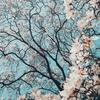 春はゆるりと、自分にエールを。