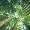 激レアさん 2019年5月18日 田島健夫 大人気リゾート「天空の森」は奥様の支えあってこそ!