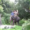 【手抜き】淡々と象さんの画像を貼っていくスレ【更新】
