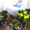 春の花の鉢植え、仔猫