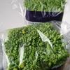 菜の花と玉子巻き
