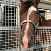 デビュー、復帰が近づく牧場の愛馬たち