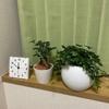 観葉植物に想う気づかぬうちの成長