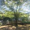 樹木と材木のケヤキを結びつけるアイテムの製作/CNCを使った木象嵌