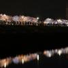 狭山池の桜のライトアップ