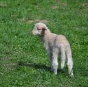迷える羊 アラサー男の人生計画