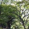 春が過ぎて・・・新緑