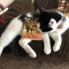 胡桃さんとイケメン猫さん達の 面白く心がほっこり劇場「黒猫王子の喫茶店」 #読了 #感想 ( @r732018 さん )