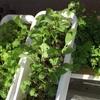 ❶③④葉物野菜🌱🥗🥕