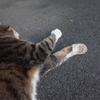 近所の猫と遊ぶ