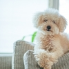 コンフォティスプラス小型犬用1箱6錠の最安値を全力で調べてみた・・