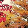 本多の森公園紅葉