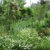 初夏の「まつこの庭」(1)