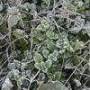 初霜、初氷、緑の中で暮らす季節。