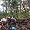 新治市民の森ハイキング