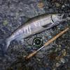 Salmon fishing in Sooke