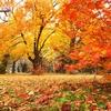 秋深まり冬がくる。