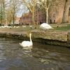 Bruges(ブルージュ)運河クルーズは最高だけど軽く迷子になりました