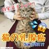 【自宅でチェック!】猫の乳腺癌~3cmでOUT⁉~