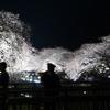 【野川夜桜ライトアップ】アクセス、混雑状況、開催時間は?