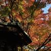 奈良公園の紅葉をミラーレスで
