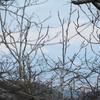 3/1      春近し、高館山~八森山 ③