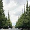 神宮外苑、イチョウ並木。