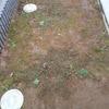 クラピアを植えて7ヶ月…ひと冬越えました