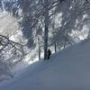 【スノーボードで感じる森の中の癒し】