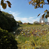 【福岡】舞鶴公園・🐦大濠公園でまったり過ごす(これが一番の目的)