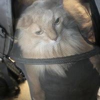 おしゃれでかわいい犬猫のリュック型キャリーバッグを使って愛猫と旅行を楽しんで来ました♪