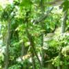 植物と私: 植物の手入れーつれずれ雑考
