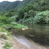 住用の川2017【名瀬】