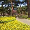春のひたち海浜公園