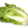 【城野親徳の美容コラム】寒い冬は「白菜」を食べてキレイになろう!