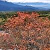 紅葉進む八ヶ岳🍁