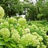 🌳昭和記念公園☔