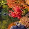 【秋の語源】あかり(黄熱)・あきらか(清明)・あきみつる(飽き満る)・あかく(紅く)