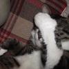 本日8月8日は『世界猫の日』!!