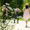 【生活習慣を見直す③】ひと駅歩いて、一日の歩数を増やす
