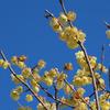 鳥撮り@東高根森林公園&緑ヶ丘霊園でトラツグミ、ルリビタキ♪