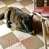 甲斐犬サンの「ココが世紀の踏ん張りドコロッ」の巻〜ヵ゙ンバルジョヾ(´д゚(´д゚*)ノ゙ォォォ→☆★