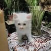 第49話:子猫の紹介『モーニャ』(望若)