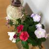 ベランダの花を飾る